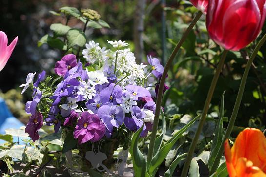 2011 spring ①.JPG