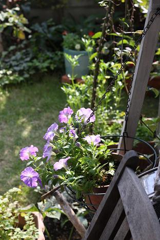 ペチュニア紫.JPG
