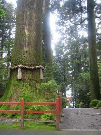 箱根神社2010 2.JPG