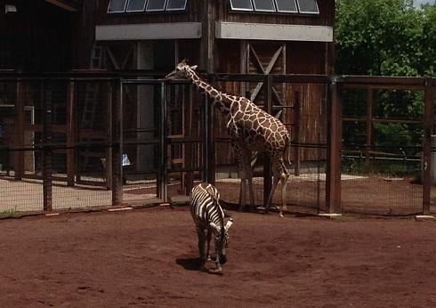 茶臼山動物園2013.06.16.jpg